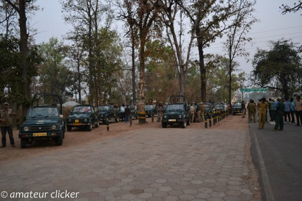 The safari jeeps line up at Khatia gate at 5.45 am. The park opens at exact 6am with a digital clock that everyone counts down waiting to enter into the park and get lost in the wilderness.